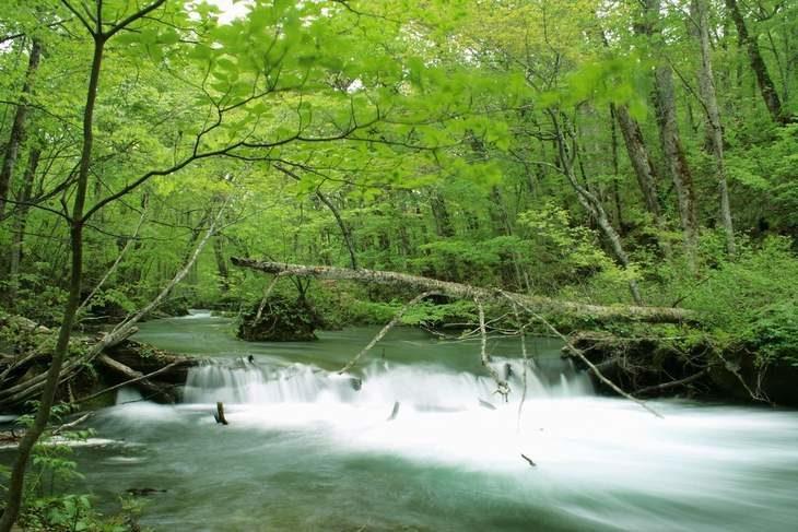 青森県 奥入瀬渓流