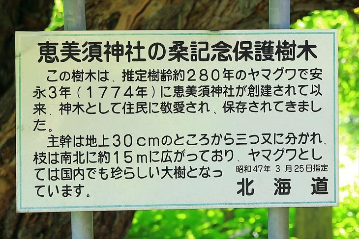 恵美須神社 保護樹木