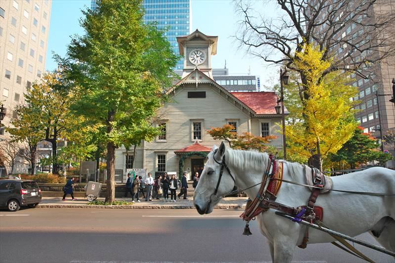 札幌観光幌馬車の銀大くんと時計台