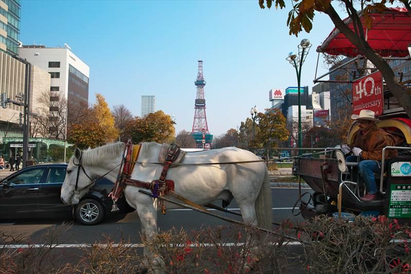 札幌観光幌馬車と銀太くん