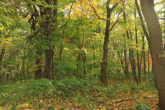 北大植物園の秋