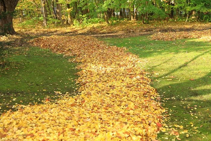 北大植物園の秋の様子