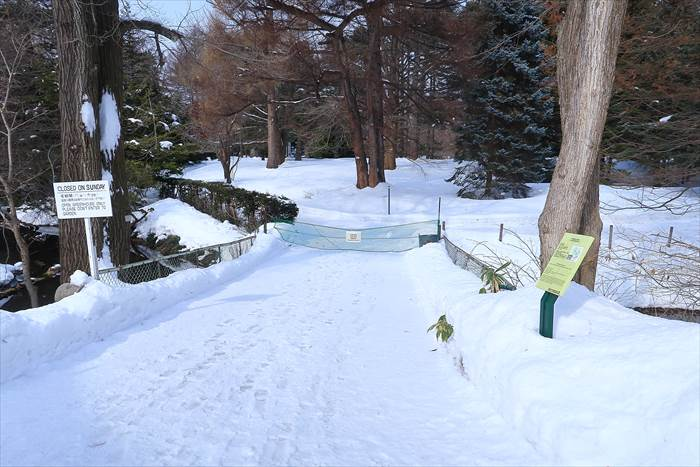 北大植物園 冬の様子