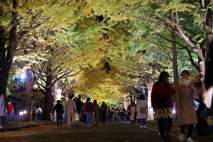 北海道大学 金葉祭 ライトアップ