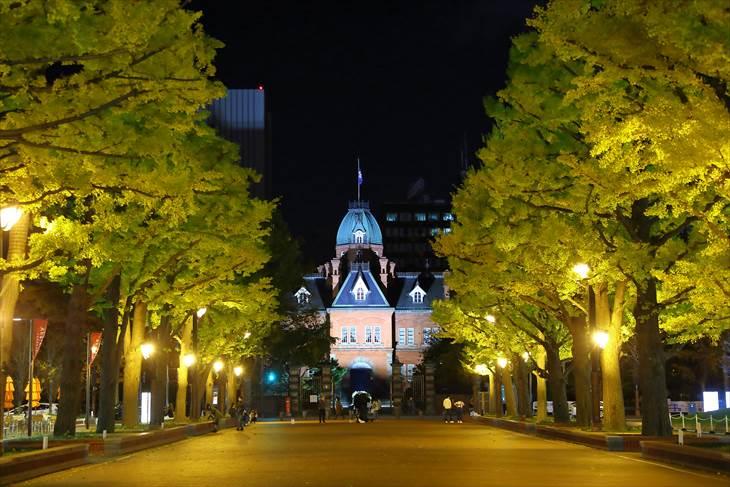 北海道庁旧本庁舎前のイチョウ並木