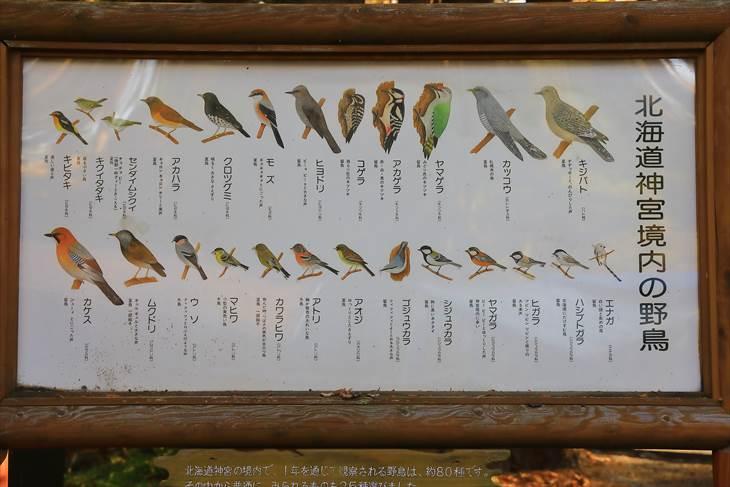 円山公園の野鳥一覧