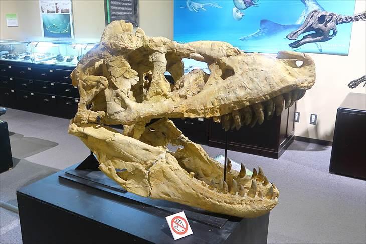 北大総合博物館 恐竜の骨格見本や化石の展示