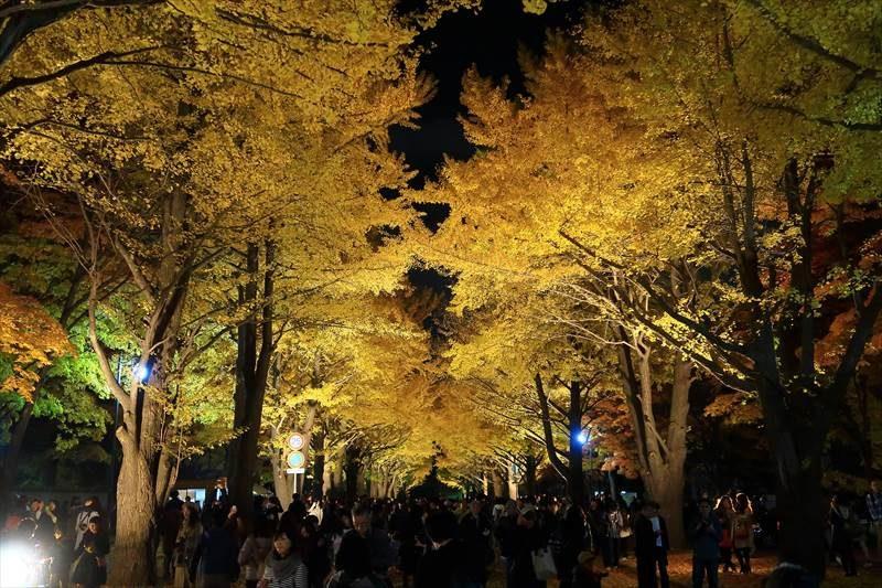 北海道大学 金葉祭 夜の様子、ライトアップ