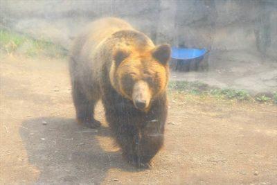 円山動物園の動物たち