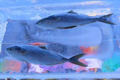さっぽろ雪まつり すすきの会場の氷漬けの魚
