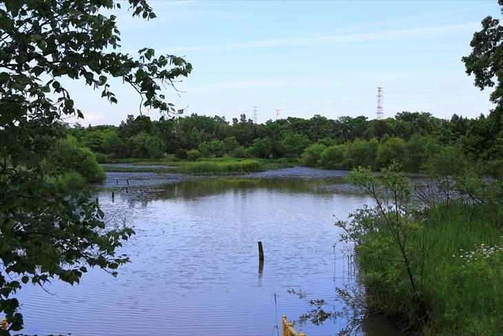 あいの里公園トンネウス沼