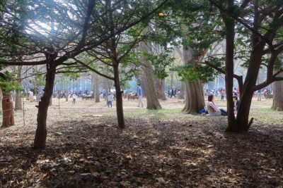円山公園 Daisy's
