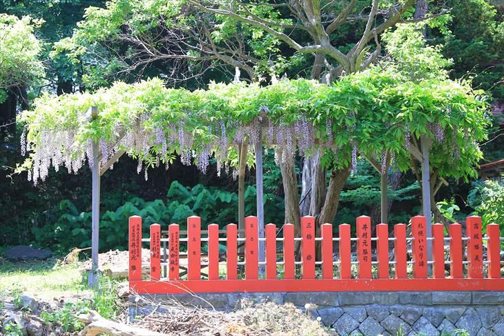 札幌伏見稲荷神社の藤棚