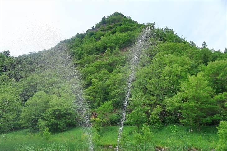 五天山公園のハルニレの木