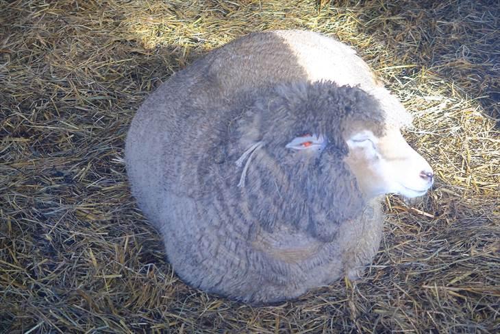 さっぽろ羊ケ丘展望台