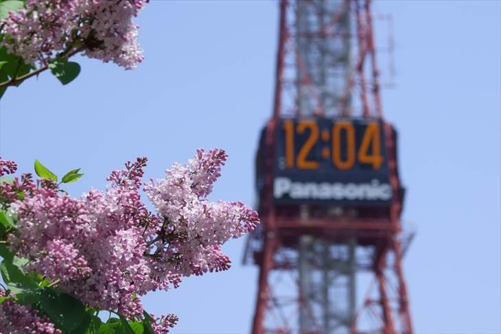 ライラックの花とさっぽろテレビ塔