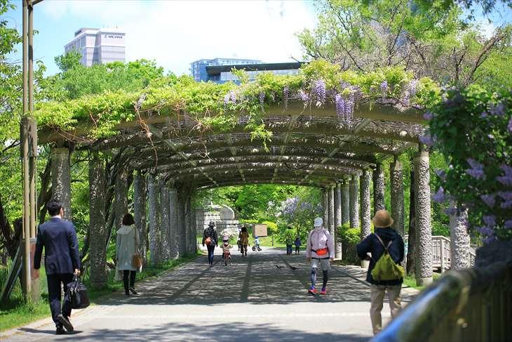 中島公園の藤棚