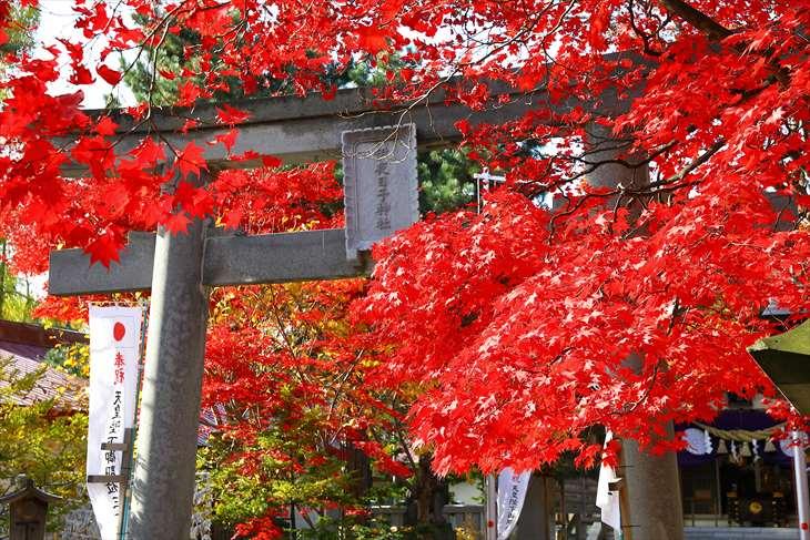 弥彦神社の紅葉