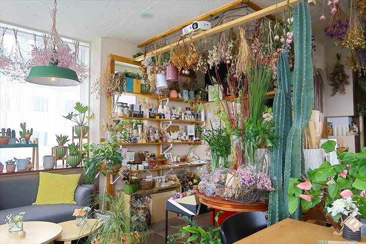 Nolly's botanical cafe