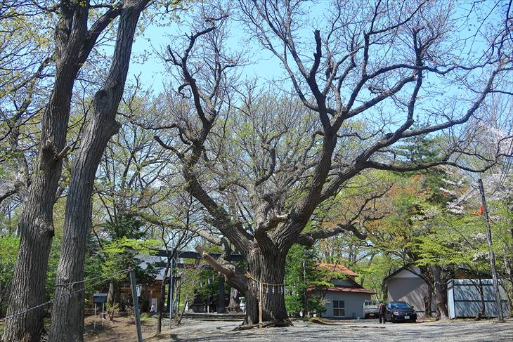 相馬神社の御神木