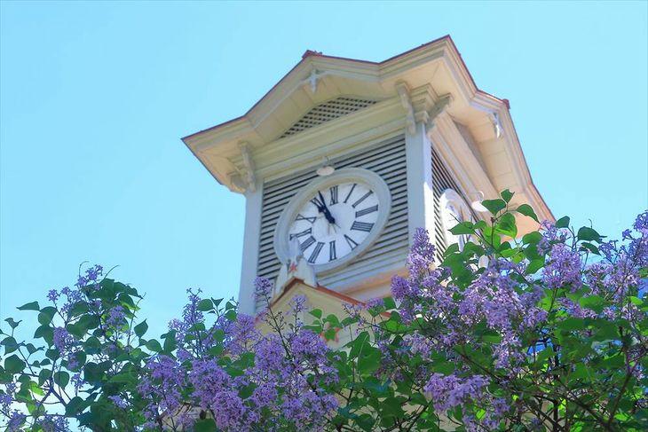 札幌市時計台とライラックの花