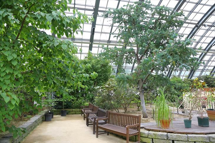 百合が原公園 温室