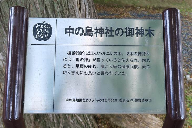 中の島神社 夫婦御神木