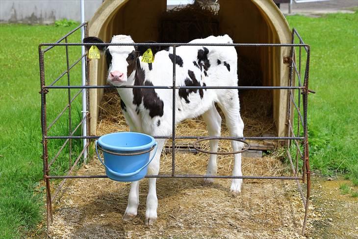 サッポロさとらんど 牛の館