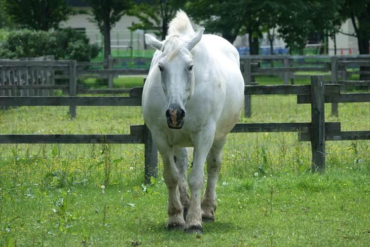 サッポロさとらんど ふれあい牧場 馬