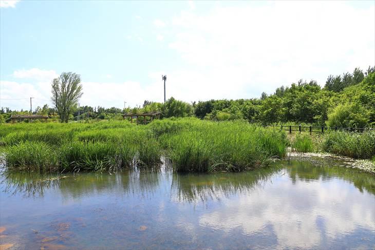 茨戸川緑地 ビオトープ池