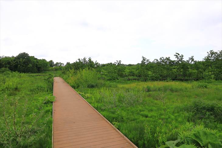 茨戸川緑地「水辺の広場」