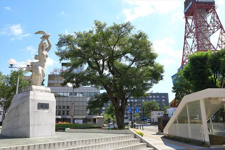 市民会館前のハルニレ