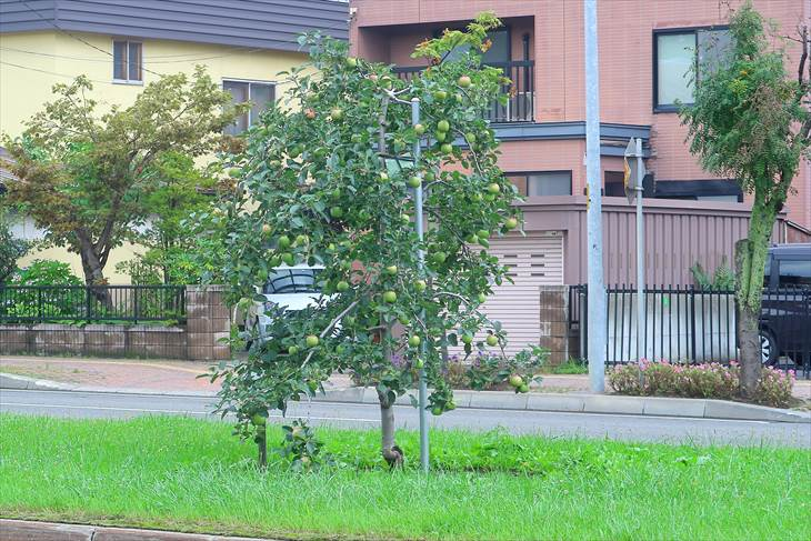 平岸リンゴ園跡