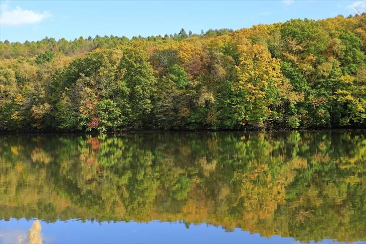 西岡公園の池の周りの紅葉