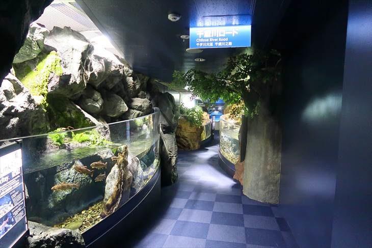 サケのふるさと 千歳水族館 1階