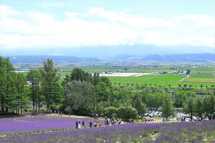 ファーム富田 森のラベンダー畑