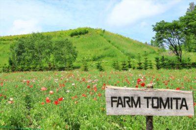 ファーム富田 山の彩りの畑