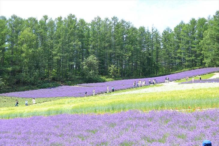 ファーム富田 彩りの畑