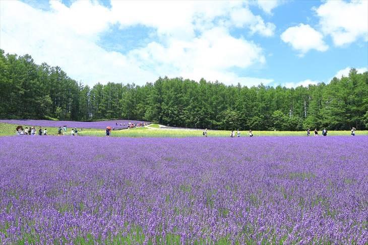 ファーム富田 森の彩りの畑