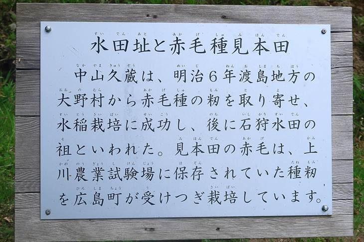水田跡と赤毛種見本田